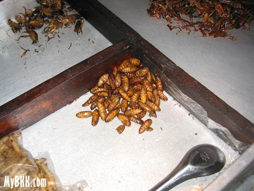 Fried silkworm and bamboo worm