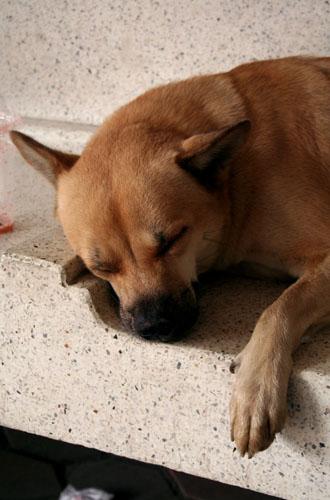 Sleeping Dog, Bangkok.