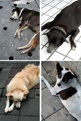 Sleeping Dogs, Bangkok.
